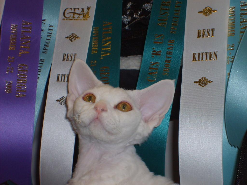Kaboom Kitten